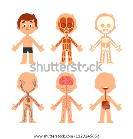 cartoon boy body anatomy human biology systems anatomical chart