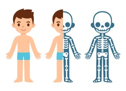 Cartoon boy skeleton anatomy chart. Simple flat vector illustration of child skeletal system cross section. Isolated vector clip art.