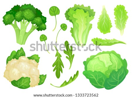 Cartoon cabbages. Fresh lettuce leaves, vegetarian diet salad and healthy garden green cabbage. Cauliflower head, broccoli or diet fresh vegetarian cooking greens vector illustration