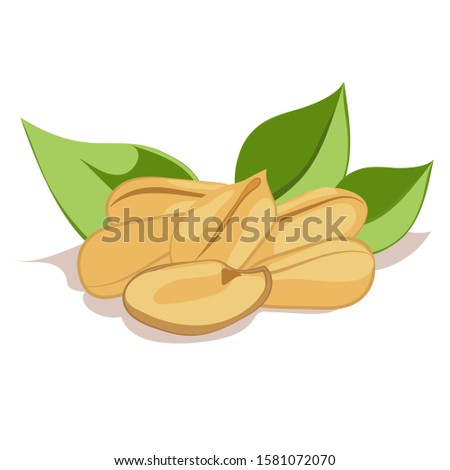 Cartoon color vector groundnut composition