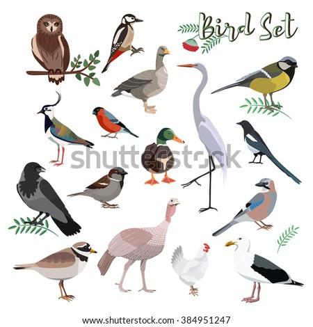 cartoon colorful birds set