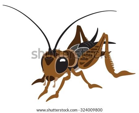 cartoon cricket bug isolated on ...