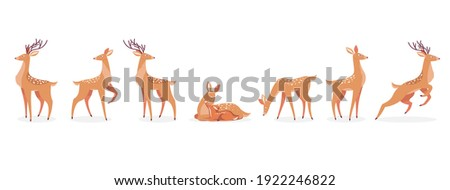 Cartoon deer set. Male horny, female, baby fawn spotted reindeers in different poses isolated on white. Vector illustrations for wildlife, animals family, forest fauna concept Stockfoto ©
