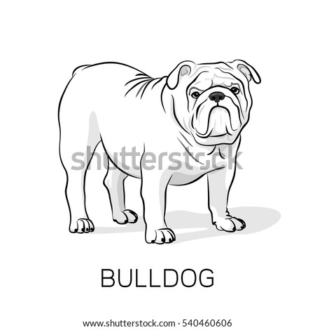 cartoon english bulldog french