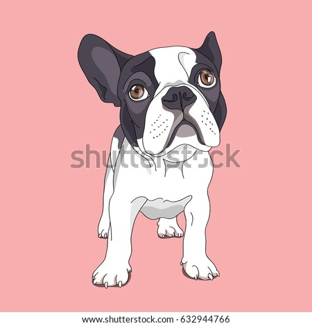 Cartoon French Bulldog on a pink background. Vector illustration.