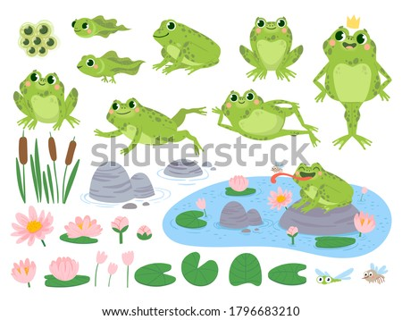 Cartoon frogs. Green cute frog, egg masses, tadpole and froglet. Aquatic plants water lily leaf, toads wild nature life vector set. Reed and flowers. Character on pond catching insect stock photo