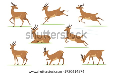 Cartoon gazelle set. African antelope walking, eating, running, jumping, resting on lawn in different poses isolated on white. Vector illustration for horny animal, wildlife, fauna concept Stockfoto ©
