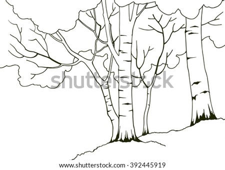cartoon hand drawn nature illustration with four birch trees coloring book page