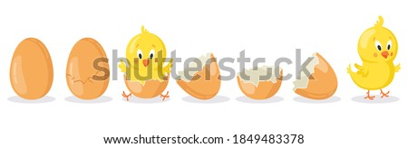 Cartoon hatched easter egg. Cracked chicken eggs with cute chicken mascot, newborn baby chick bird hatching from egg vector illustration set. Poultry cute yellow character appearance Stockfoto ©