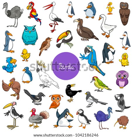 cartoon illustration of birds