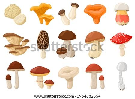 Cartoon mushrooms. Poisonous and edible mushroom, chanterelle, cep, amanita and truffle isolated vector illustration set. Forest wild mushrooms types. Organic porcini and chanterelle, poisonous fungus