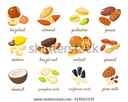 cartoon nuts set   hazelnut