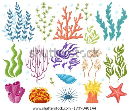 Cartoon ocean plants. Anemones, corals and seaweed, marine kelp, aquarium plants. Underwater reef flora vector illustration icons set