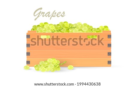 Cartoon of bunch of mellow grape for winery. Vector farm organic product, natural vineyard, sweet juicy snack. Vector vegetarian food, fruit for export, grocery shopping isolated on white background Foto stock ©