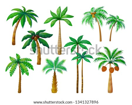 cartoon palm tree jungle palm
