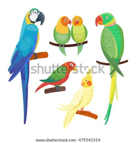 Shutterstock Cartoon parrots set and parrots wild animal birds