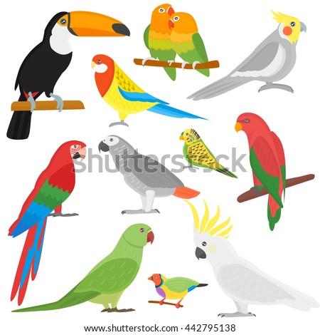cartoon parrots set and parrots