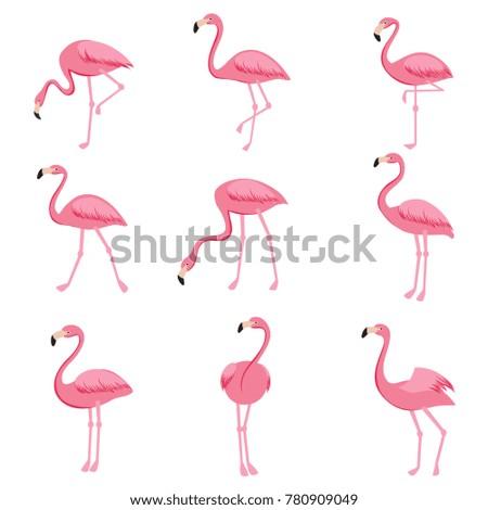 Cartoon pink flamingo vector set. Cute flamingos collection. Flamingo animal exotic, nature wild fauna illustration