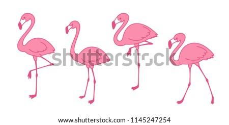 Cartoon pink flamingo vector set Cute flamingos collection Flamingo character animal exotic nature wild fauna illustration