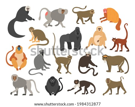 Cartoon primates. Chimpanzee and gorilla monkeys. Wild animals set with tails. Cute apes sit or climb on trees. Tropical gibbon and orangutan. Funny capuchin or macaque. Vector fauna Photo stock ©