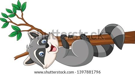 cartoon raccoon on the tree