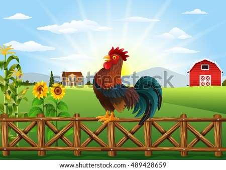 Stock Photo Cartoon rooster crowing at farm field in the morning with sun rising
