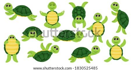 cartoon set of cute turtle