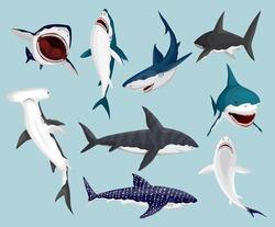 Cartoon sharks. Scary jaws and swimming angry ocean sharks. Big dangerous marine predators. Vector illustration of marine wildlife. Wild fish set
