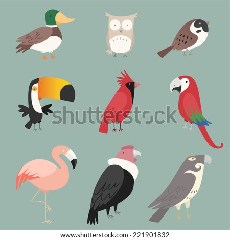 cartoon species bird collection
