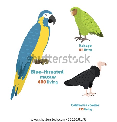 cartoon tropical parrot wild