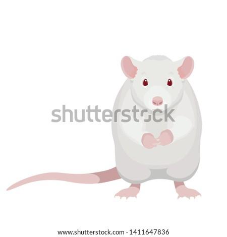 cartoon white rat vector