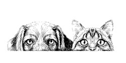 Cat and dog. Wall sticker. Graphic, artistic, sketch drawing of a cat and a dog looking at a table on a white background.