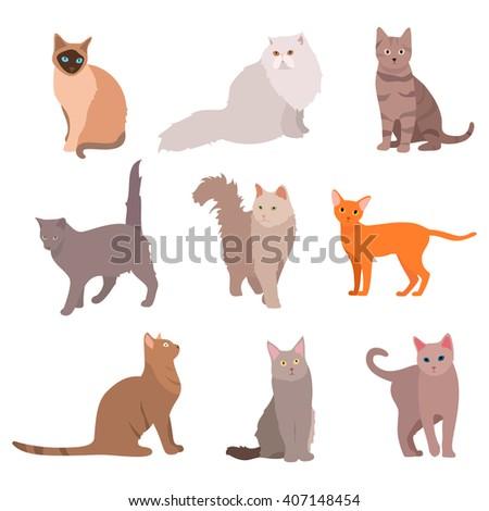 cat big set beautiful cartoon