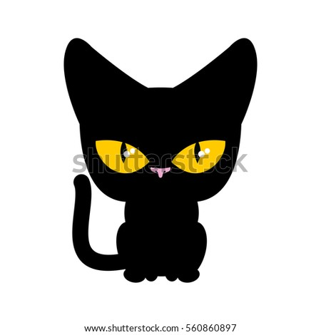 cat black isolated pet on