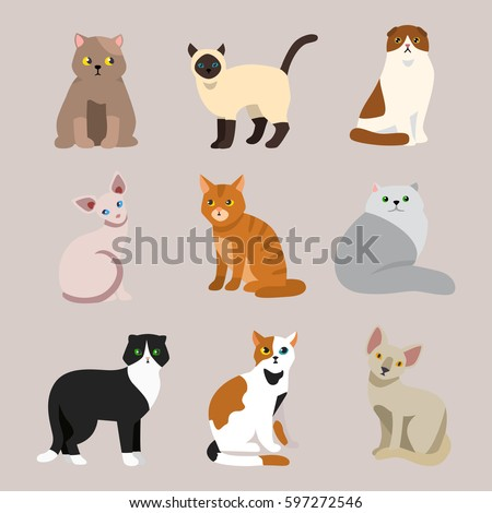 Shutterstock Cat breed cute pet portrait fluffy young adorable cartoon animal and pretty fun play feline sitting mammal domestic kitty vector illustration.