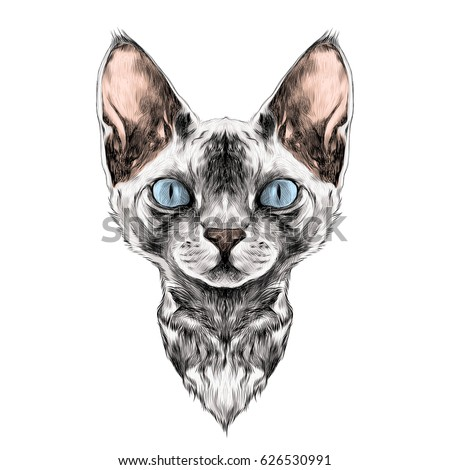 cat breed sphynx face sketch