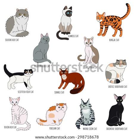 cat breeds cartoon style vector