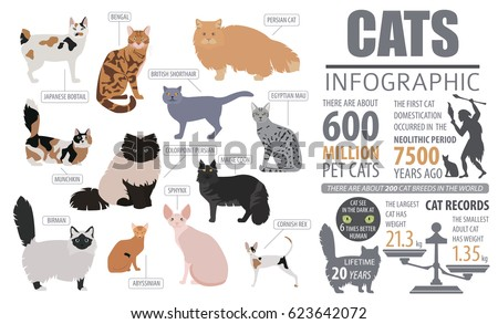 cat breeds infographic template ...