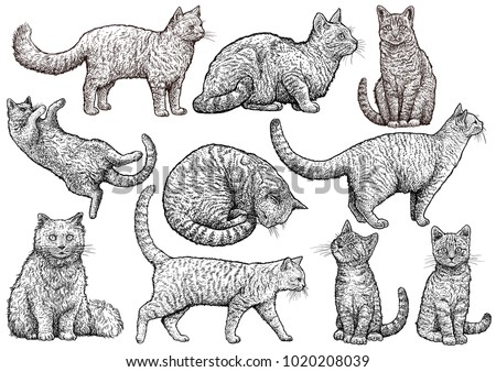 cat collection illustration