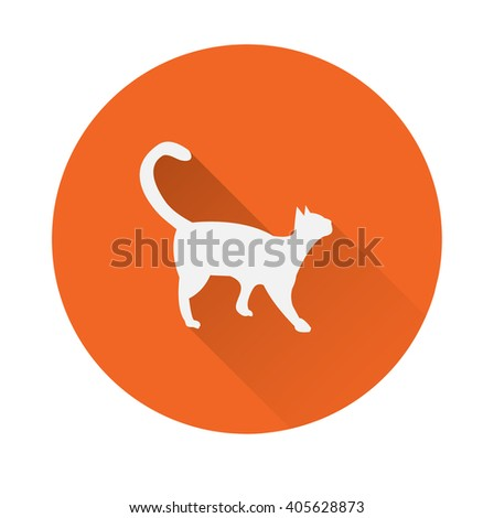 cat domestic animal long shadow