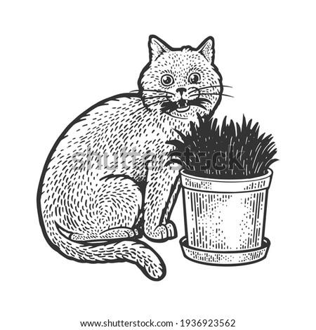cat eats grass sketch engraving