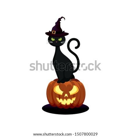 cat feline with hat of witch in pumpkin halloween