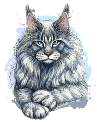 Cat. Graphic, artistic, hand-drawn, color sketch portrait of a Maine Coon cat on a white background in watercolor style.