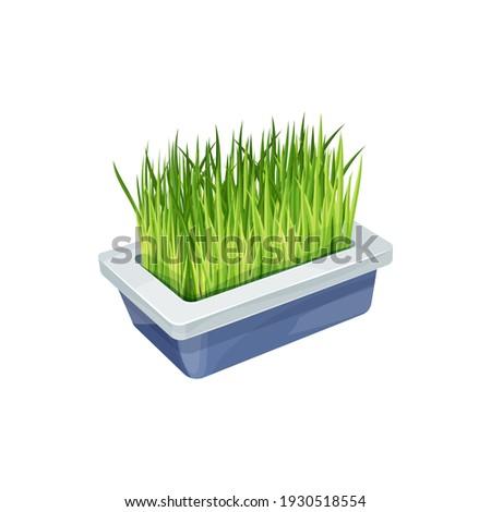 cat grass  pet care and animals