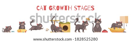 Cat growth stages composition with set of isolated icons with characters of kitten in various situations vector illustration