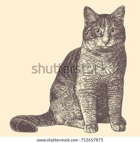 cat hand drawn engraving