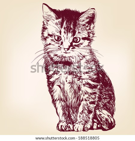 cat    hand drawn vector
