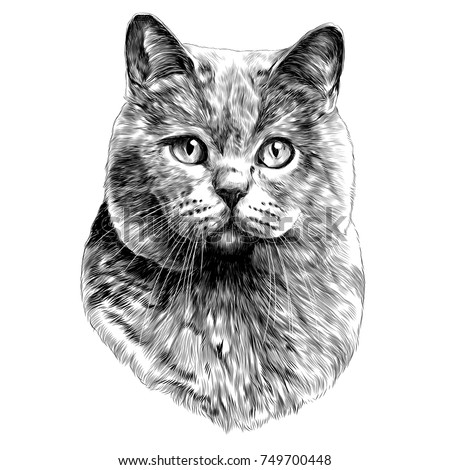 cat head sketch vector graphics