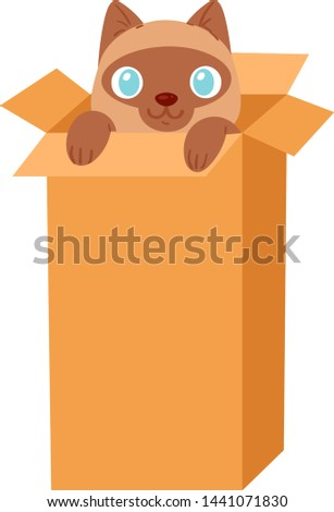 cat in box vector kitty pet