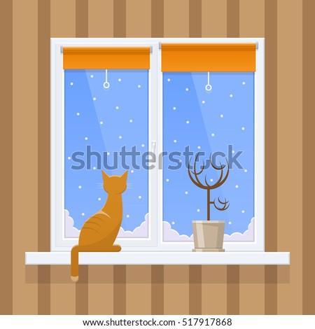 cat on the window  winter
